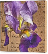 Iris On Vintage 1912 Postcard Wood Print