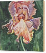 Iris On Yupo Wood Print