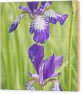 Iris Pair Wood Print