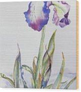 Iris Passion Wood Print