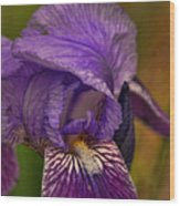 Iris Popping Out Wood Print