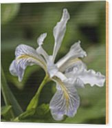 Iris Profile Wood Print
