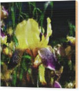 Iris Purple And Yellow Wood Print