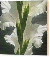Gladiolus Spectacular #2 Wood Print