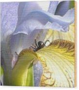 Iris Spider Wood Print