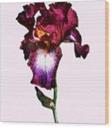 Iris Splash O' Wine Wood Print