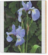 Iris Study Wood Print