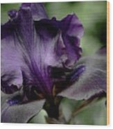 Iris - Superstition Wood Print