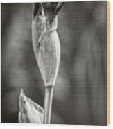 Iris To Be Wood Print