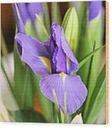 Iris Unfolding II Wood Print