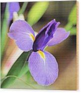 Iris Unfolding IIi Wood Print