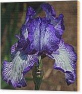Iris Unraveled Wood Print