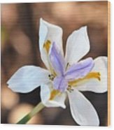 Iris Wide Open Wood Print