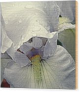 Iris With A Bonnet Series 7 Wood Print