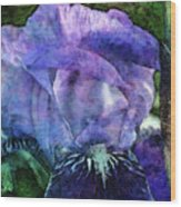 Iris With Buds 9821 Idp_2 Wood Print