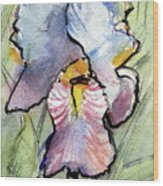 Iris With Impact Wood Print