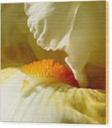 Iris With Touch Of Orange Wood Print