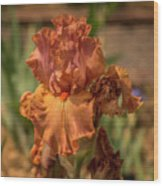 Iris_dsc4793_16 Wood Print
