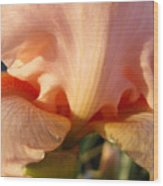Irises Art Prints Orange Peach Iris Flower Giclee Baslee Troutman Wood Print