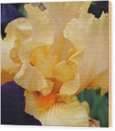 Irises Art Prints Peach Iris Flowers Artwork Floral Botanical Art Baslee Troutman Wood Print