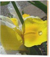 Irises Artwork Iris Flowers Art Prints Flower Rain Drops Floral Botanical Art Baslee Troutman Wood Print