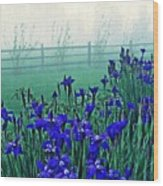 Irises At Dawn 3 Wood Print