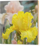 Irises Botanical Garden Yellow Iris Flowers Giclee Art Prints Baslee Troutman Wood Print