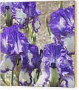 Irises Floral Art Iris Flowers Purple White Baslee Troutman Wood Print