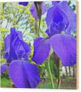 Irises Floral Garden Art Print Blue Purple Iris Flowers Baslee Troutman Wood Print