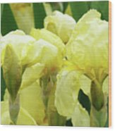 Irises Flower Garden Yellow Iris Baslee Troutman Wood Print
