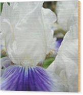 Irises Flowers Art Print Gifts White Purple Iris Flower Wood Print