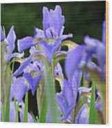 Irises Flowers Art Prints Blue Purple Iris Floral Baslee Troutman Wood Print