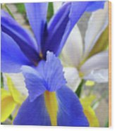 Irises Flowers Artwork Blue Purple Iris Flowers 1 Botanical Floral Garden Baslee Troutman Wood Print