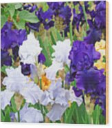 Irises Flowers Garden Botanical Art Prints Baslee Troutman Wood Print