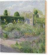 Irises In The Herb Garden Wood Print
