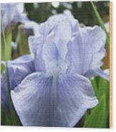 Irises Light Blue Artwork Iris Flowers Baslee Troutman Wood Print