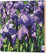Irises Princess Royal Smith Wood Print