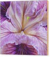 Irises Summer Purple Lavender Iris Flower Art Print Baslee Wood Print