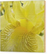 Irises Yellow Brown Iris Flowers Irises Art Prints Baslee Troutman Wood Print