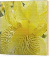 Irises Yellow Brown Iris Flowers Irises Art Prints Baslee Troutman Wood Print