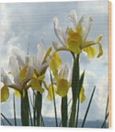 Irises Yellow White Iris Flowers Storm Clouds Sky Art Prints Baslee Troutman Wood Print
