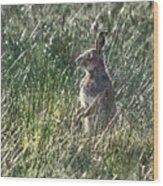 irish Hare Wood Print
