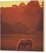 Irish Horse In Gloaming Wood Print