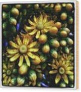 Irish Rose. Also Known As Pinwheel Wood Print