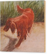 Irish Setter In The Grass Wood Print