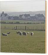 Irish Sheep Farm I Wood Print