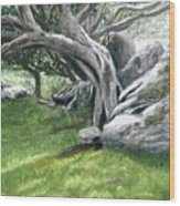 Irish Tree Ring Of Kerry Wood Print