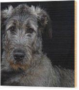 Irish Wolfhound Droc Vi Wood Print