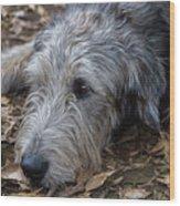 Irish Wolfhound Ivan Wood Print