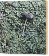 Iron Ivy Wood Print